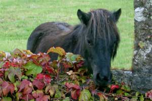 Photo of Pony